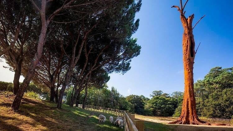 'Pequi Vinagreiro' de Ai Weiwei em Serralves