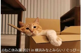 ねこ休み展 in 横浜みなとみらい