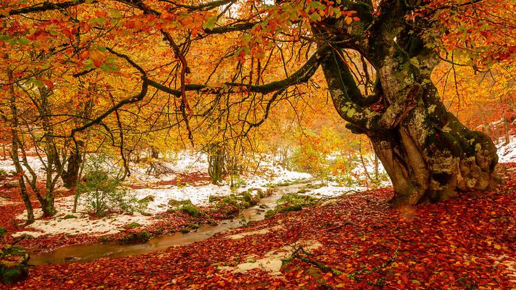 Selva de Irati a finales de otoño, con las primeras nieves