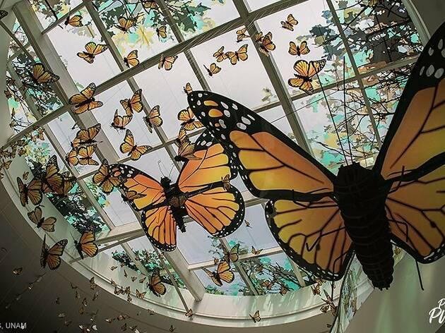UNAM Pabellón de la Biodiversidad