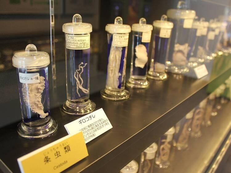 Parasitological Museum, Tokyo