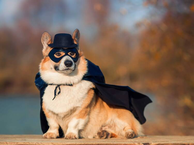 A Pawlloween Pawty with costumed doggos!