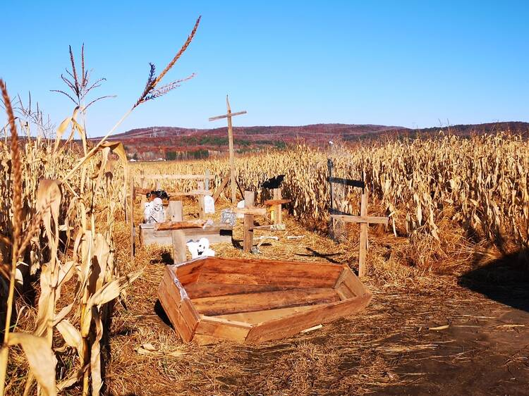 A spooky cornfield maze to get lost in