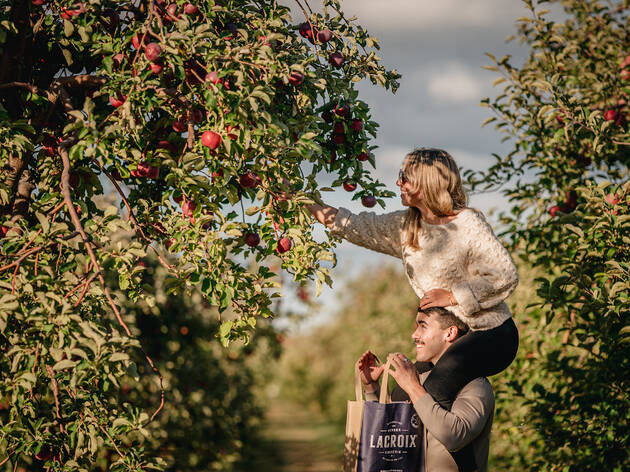 15 orchards and farms perfect for apple picking in Montreal