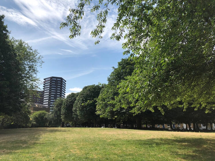 Islington wants to create a tree specialist for every housing estate