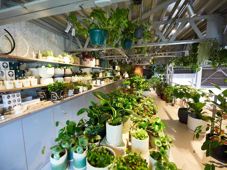 5 best plant shops and nurseries in Tokyo