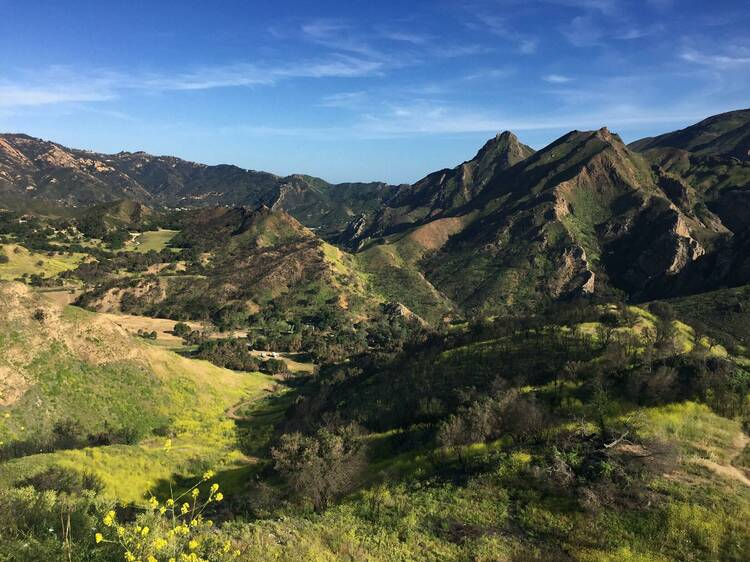Santa Monica Mountains plant restoration
