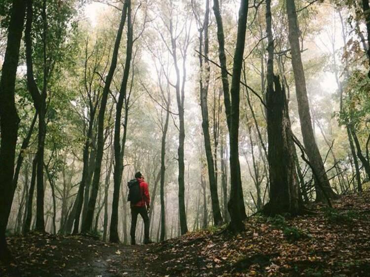 Gault Nature Reserve, Mont Saint-Hilaire
