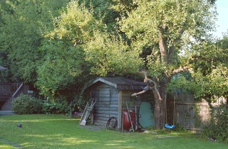lower res2Jeff Wall Boy falls from tree 2010 a4.jpg