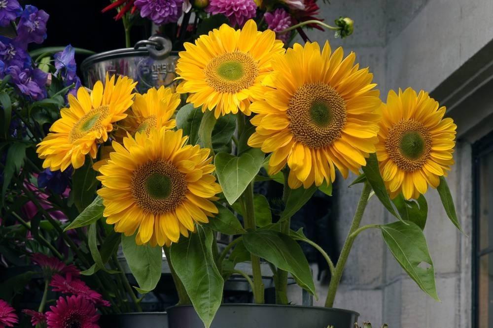Dawson Flowers