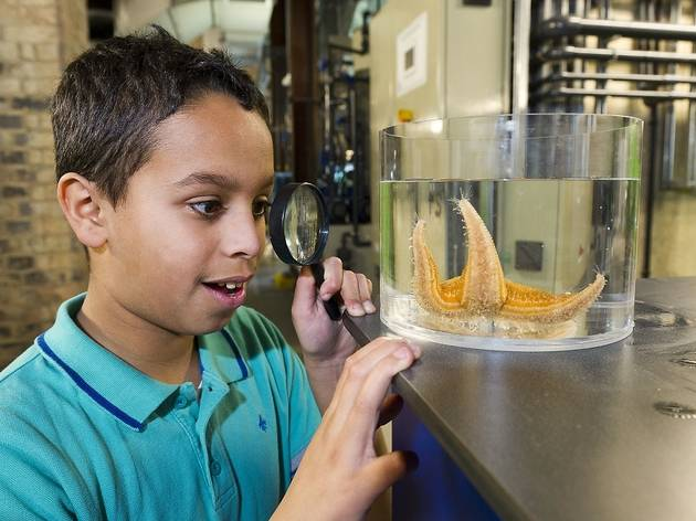 Behind-the-Scenes Tours of London Aquarium