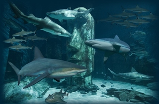 Shark Reef Encounter