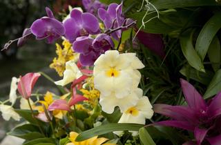Orchids: A Plant Hunter's Paradise
