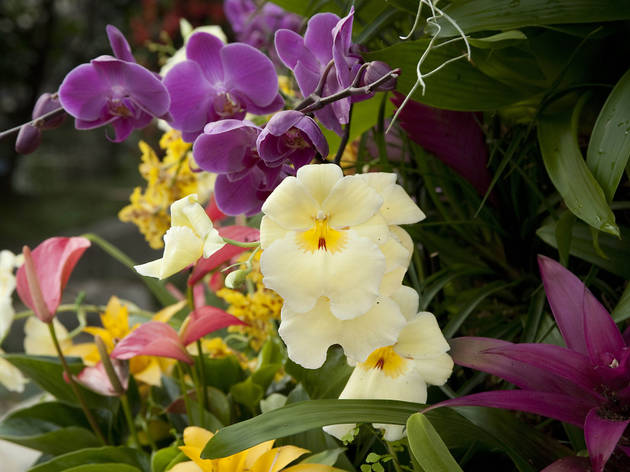 Orchids: A Plant Hunter's Paradise