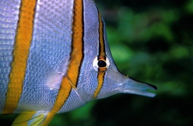 © London Aquarium.jpg