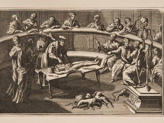 Curious Anatomys: An Extraordinary Story of Dissection and Discovery