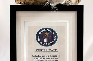 Smokey_1760 certificate.jpg