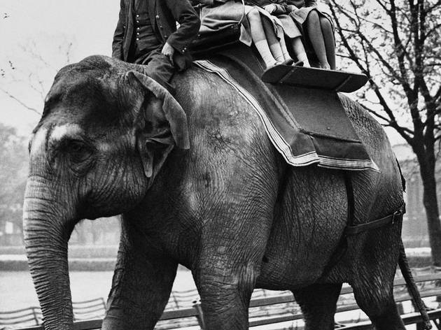 Princess Elizabeth  and Princess Margaret riding an elephant at ZSL London Zoo 1939 - COPYRIGHT AP PA (CREDIT MUST BE GIVEN).jpg