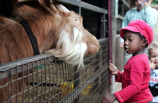 Ney Ney feeds the goats.jpg