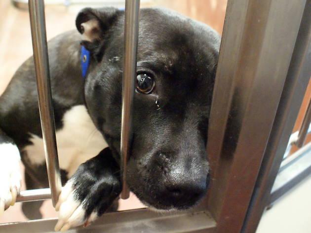 New_Dog in kennels2.jpg