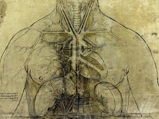 Leonardo da Vinci: Anatomist