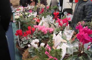 Chelsea Physic Garden Christmas Fair