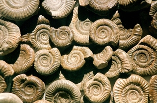 Fossil Forage