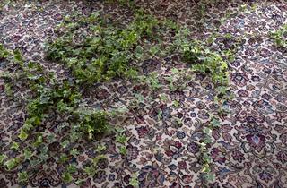 Abbas Akhavan: Study for a Garden