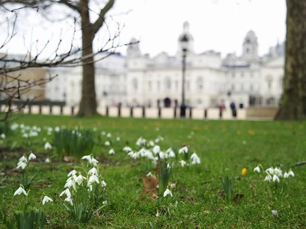 (Snowdrops © Indusfoto,  Royal Parks)