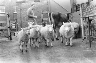 Kentish Town City Farm: The Past 40 Years