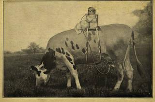 milkintheland.jpg