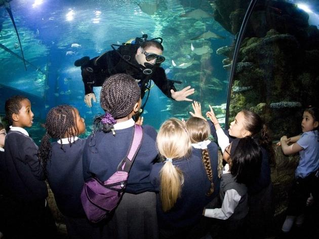 (© Sea Life London Aquarium)