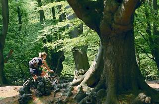 101 things to do in London with kids, cycling routes Epping Forest
