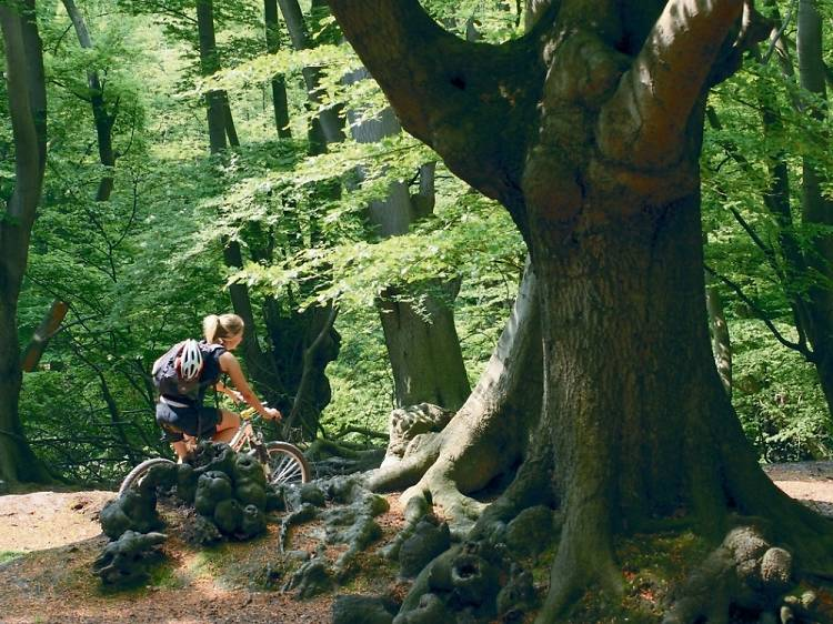Cycle between the trees in Epping Forest