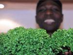 222 Veggie Vegan