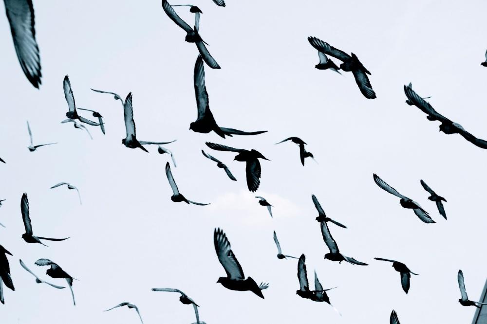 migrate.46057.jpg
