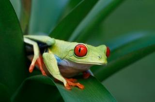 National Frog Day