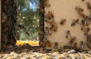 Vanishing of the bees.jpg