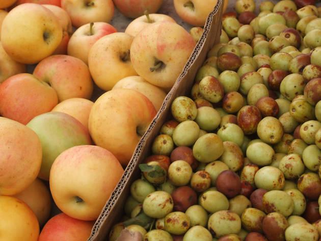Abundance Fruit Day