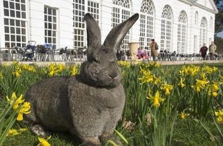 Easter at Kew