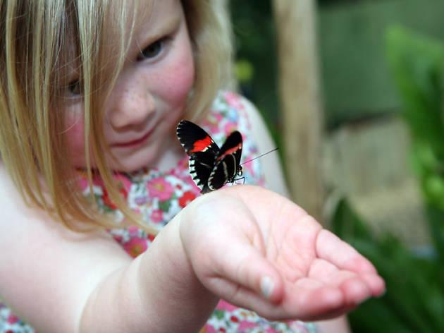sensational butterflies, natural history museum