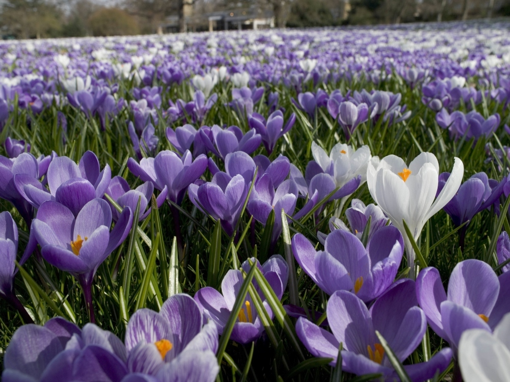 Celebrate the seasons at Kew Gardens
