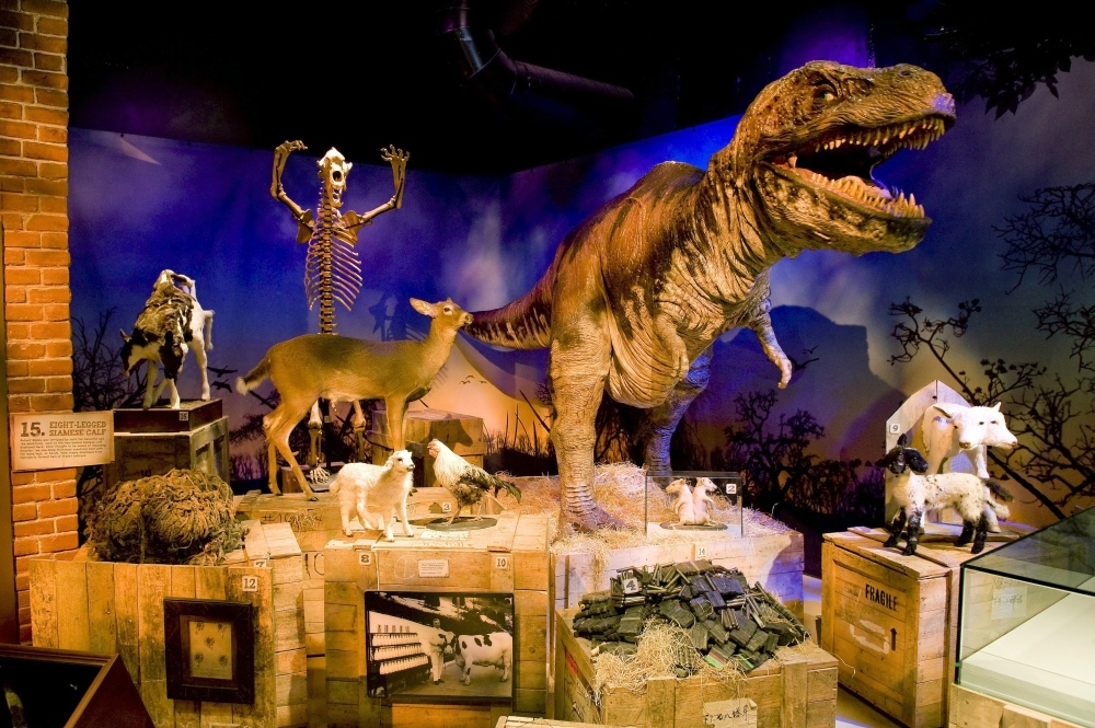 Marvel at Ripley's mad exhibits