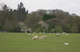 Woodlands Farm.JPG