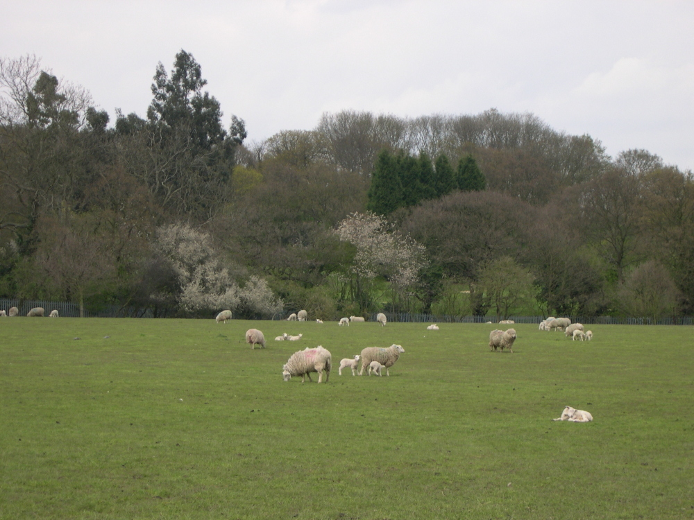 Woodlands Farm Trust