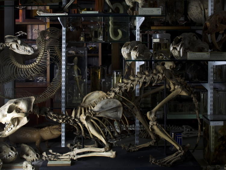 Gawp at the Grant Museum's skeleton collection