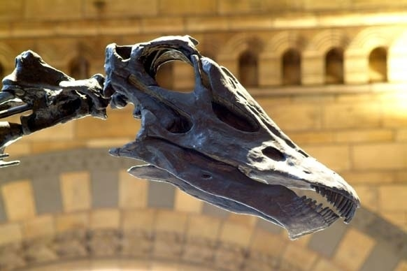 Visit the dinosaurs at the Natural History Museum