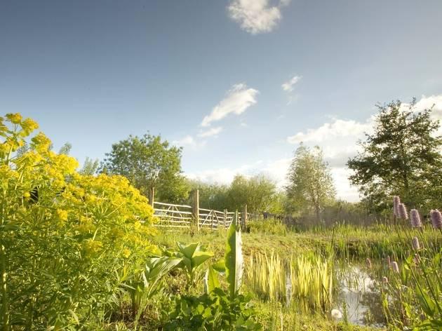 (Bog Garden © Ross Paxton)