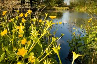 Mother's Day Lunch at London Wetland Centre