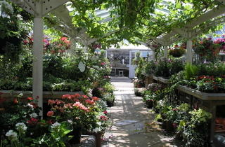 Clifton Nurseries Summer 2010 image 5.jpg